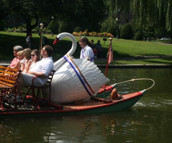 Swan 11 1